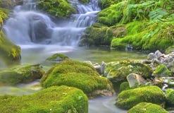 Pure nature. Stock Photos