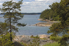 Pure nature in sweden royalty free stock photography