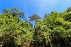 Pure nature at Umphang Wildlife Sanctuary,Tak Province,northwestern Thailand. UNESCO World Heritage site  and Southeast Asia's top virgin forest Royalty Free Stock Image