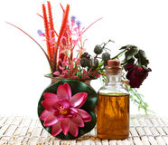 Pure olive oil. Olive oil bottle with flowers and plants isolated on white background Stock Images
