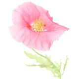 Pure Poppy Royalty Free Stock Photos