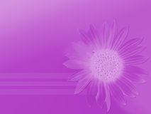 Pure purple. Purple backround with sunflower Vector Illustration