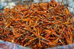 Pure red whole dried chillies pepper in Thailand local market. Use for cooking spicy food and herb Royalty Free Stock Photography