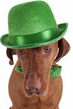 Dog with green hat Stock Photos