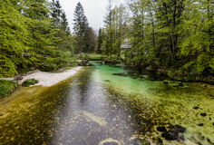 Pure river in Slovenia Royalty Free Stock Photos