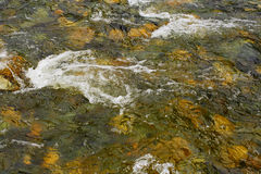 Pure river transparent water. Variant three. Royalty Free Stock Photography