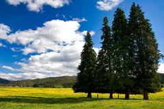 Pure sky, pure meadow Royalty Free Stock Image