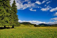 Pure sky, pure meadow Stock Photos