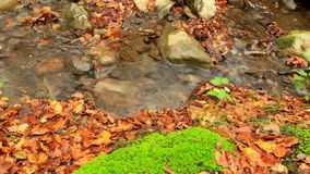 Pure Stream In The Woods. Beautiful autumn forest with fallen leaves and small clean river. Two frames. A moving camera. Slider stock video footage