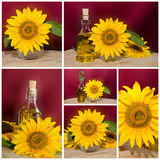 Pure sunflower oil Stock Photo