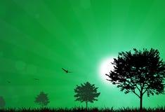Pure Sunrise. Fresh nature summer sunrise with flying birds outdoors Royalty Free Stock Photography