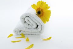 Pure towel spa. White towel rolled with yellow flower and petals isolated Royalty Free Stock Photos