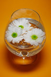 Pure Water. White daisies floating in a glass of fresh water with an orange background Stock Photos