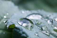 Pure water rain drops on green leaf with venation zen background macro Stock Photos
