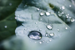 Pure water rain drops on green leaf with venation zen background macro Royalty Free Stock Photos