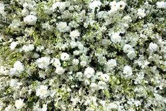 Pure White Array of Flowers Background stock images