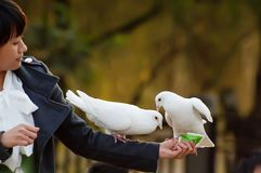 Pure white dove and girl Stock Image