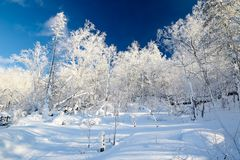 The pure white fairy tale world on the mountain. The photo was taken in China`s snow town scenic spot Harbin city Heilongjiang province,China Royalty Free Stock Images