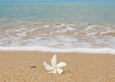 Pure white flower in the sand at the azure sea Royalty Free Stock Photo