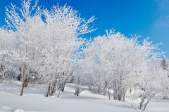 The pure white place and blue sky Royalty Free Stock Image