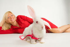 Pure white rabbit Royalty Free Stock Images