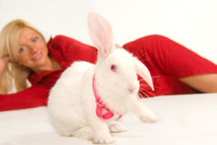 Pure white rabbit Royalty Free Stock Photos