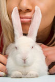 Pure white rabbit Stock Photo