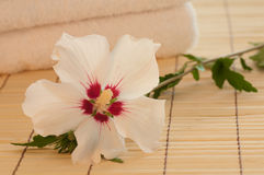 Pure White Rose of Sharon in a Spa Vignette Royalty Free Stock Photography