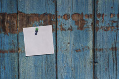 Pure white small leaf on a blue wooden wall Royalty Free Stock Photography