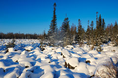 The pure white soft snow and forest Royalty Free Stock Photos