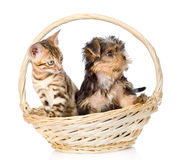 Purebred bengal kitten and Yorkshire Terrier puppy sitting in basket Stock Images