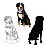 Swiss mountain dog in three different styles. Purebred canine sitting isolated on white background. Swiss mountain dog silhouette, sketch and color illustration vector illustration
