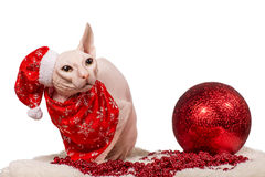 Purebred cat dressed as Santa Claus Royalty Free Stock Image