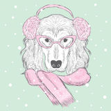 Purebred dog. Spaniel. Vector illustration for greeting card, poster, or print on clothes. Royalty Free Stock Photography
