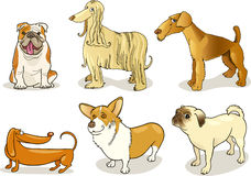 Purebred dogs. Cartoon illustration of six purebred dogs Stock Photo