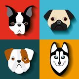 purebred dogs design Stock Images