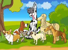 Purebred dogs group cartoon illustration Royalty Free Stock Photo
