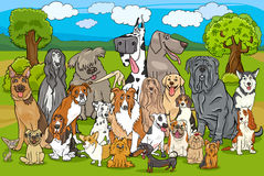 Purebred dogs group cartoon Stock Images