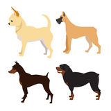 Purebred dogs set Royalty Free Stock Photo