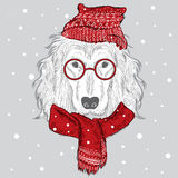 Purebred dogs in the vector. Dog painted by hand. Dog clothing . Spaniel. Royalty Free Stock Photography