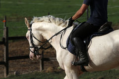 Purebred gray horse galloping with unknown rider Stock Photos