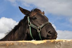 Purebred horse against sky Royalty Free Stock Photo