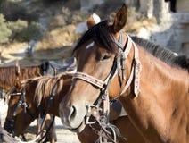 Purebred horse Stock Photos