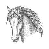 Purebred horse head sketch for equine sport design Royalty Free Stock Photos
