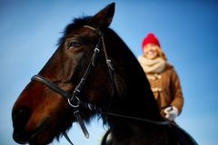 Purebred horse Stock Images
