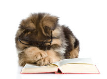 Purebred puppy in glasses read book Stock Photo