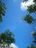 Purely blue sky with green tree and red flower stock photos