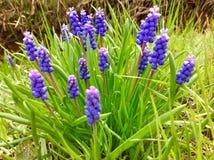 Pureple花和绿色自然背景 免版税库存照片