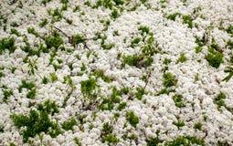 Pureza de la naturaleza en pequeñas cosas en parque del área de Lanaudiere imagenes de archivo