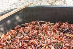 Purge tub full of live crawfish and stir paddle. Purge tub full of live crawfish being purged with salt Stock Image